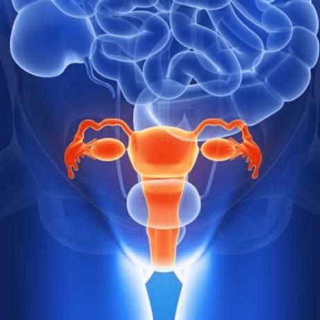 Emplacement-utérus